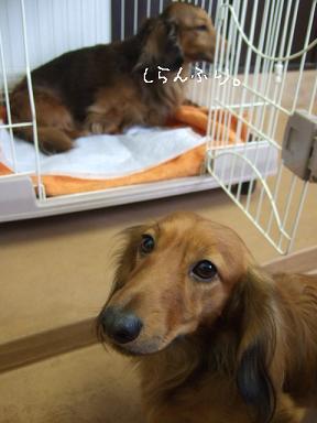 2009.02.09  マックス&クイール①