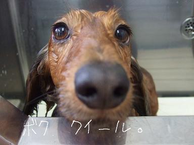 2009.02.09  マックス&クイール③