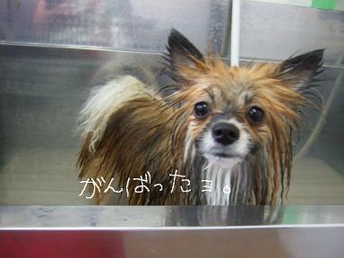 2009.02.12  モカちゃん②