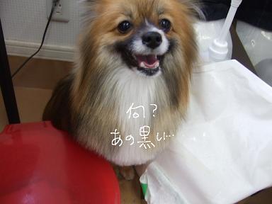 2009.02.12  モカちゃん⑤