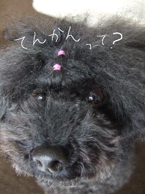 2009.01.31 アンジェ癲癇③