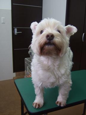 2009.02.15  クッキーちゃん?