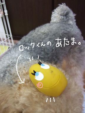 2009.02.22  ロックくん②