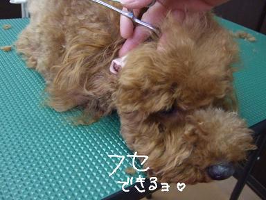 2009.02.22 くるみちゃん②