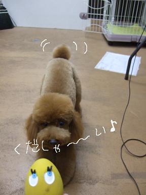 2009.02.22 くるみちゃん⑤