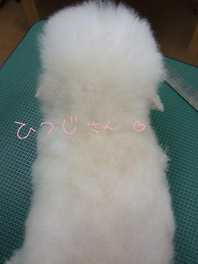 2009.02.22 ひめちゃん③