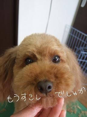 2009.03.01  ウール&アロア③