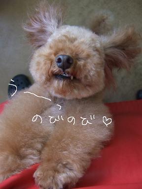 2009.03.01  ウール&アロア④