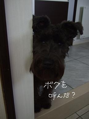 2009.03.07  ジャン&ヴィクター①