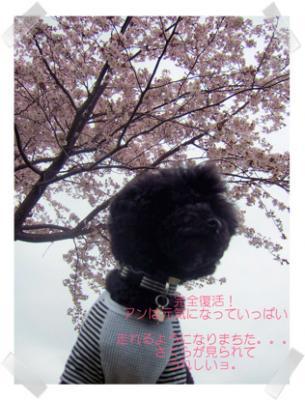 2009.5.12 山水ホテル和風③