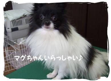 2009.05.17  マグちゃん?