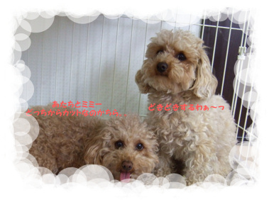 2009.05.18  ティア&ミミー①