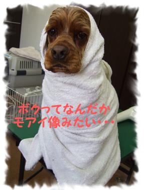 2009.05.19  なみへいくんと玉ちゃん②