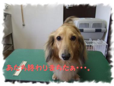 2009.05.19  なみへいくんと玉ちゃん③