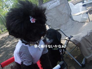 2009.05.21  支笏湖 美笛⑤