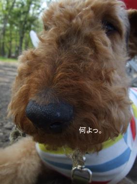 2009.05.21  支笏湖 美笛⑰
