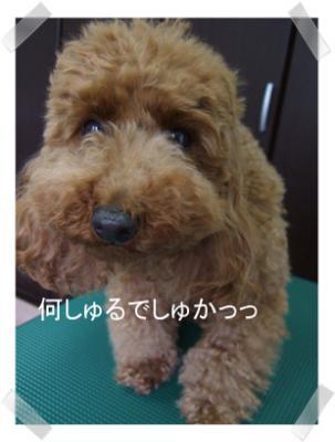 2009.05.23  くるみちゃん②