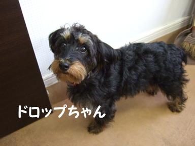 2009.05.28  ドロップちゃん①