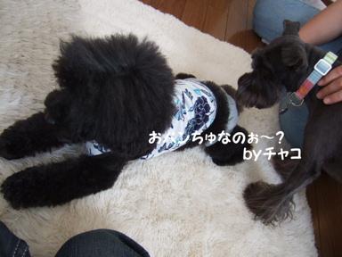 2009.05.29  ラビくんお見舞いへ②