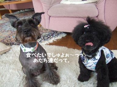 2009.05.29  ラビくんお見舞いへ⑫