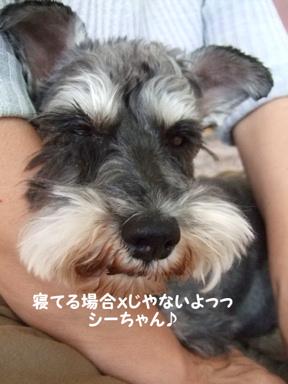 2009.05.29  ラビくんお見舞いへ⑬