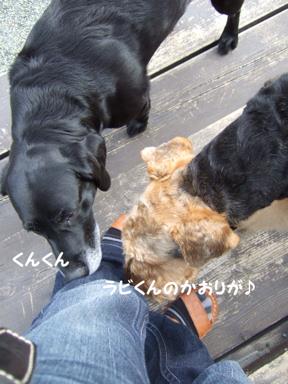 2009.05.29  ラビくんお見舞いへ⑯