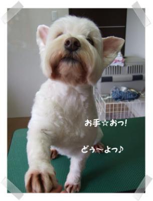 2009.06.02  クッキーちゃん④
