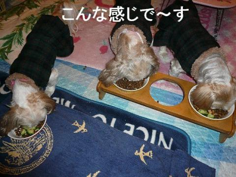 oyako_20081224_1