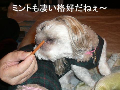 mint_20081226_1