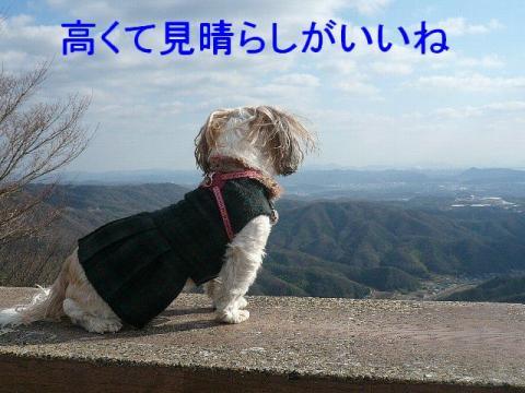 mint_20081228_5