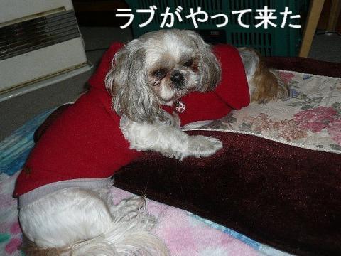 love_20090104_1