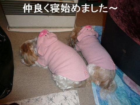 oyako_20090118_4