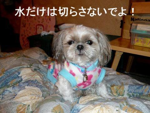 mint_20090129_6