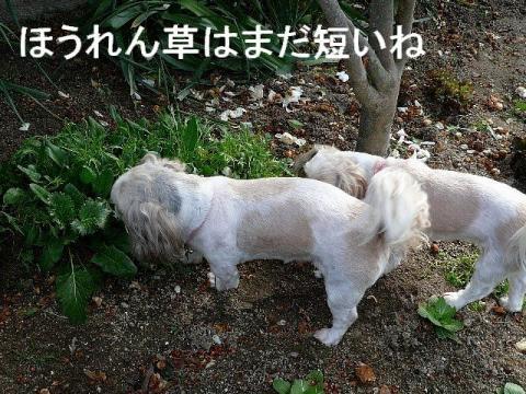 lovemint_20090217_2