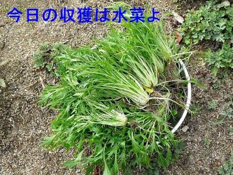 yasai_20090217_2