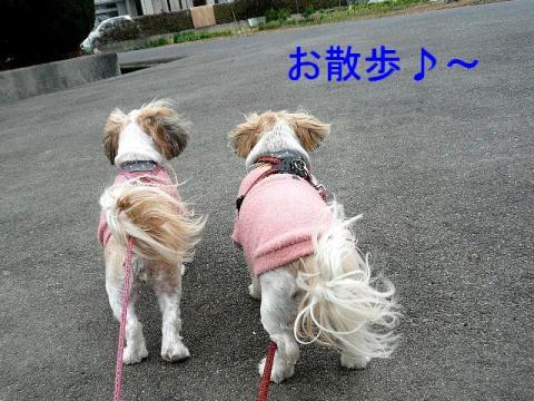 bibimint_20090217_1