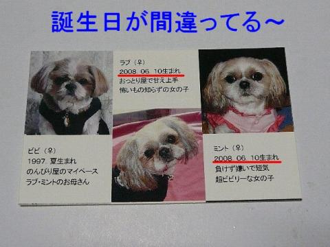 meisi_20090216_3