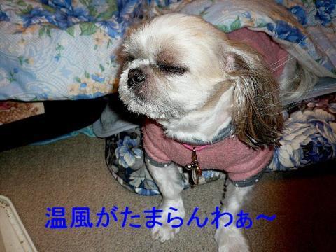 mint_20090225_4