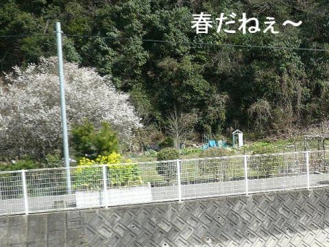 hana_20090302_1