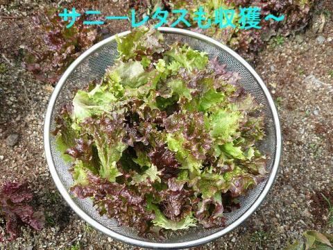 yasai_20090307_2