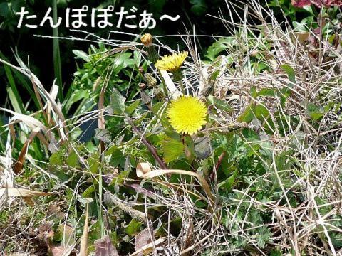 hana_20090309_1