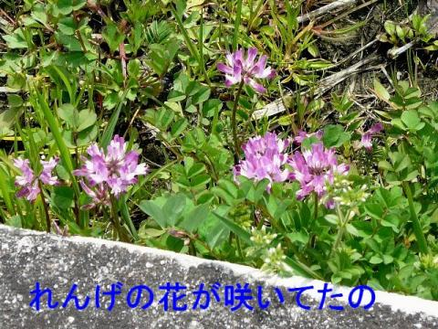 hana_20090312_1