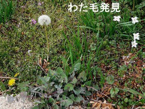 hana_20090323_3