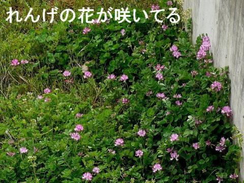 hana_20090323_4