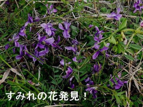 hana_20090323_1