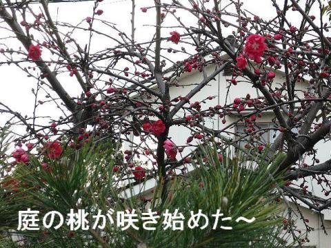 hana_20090323_2