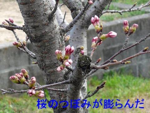 hana_20090329_1