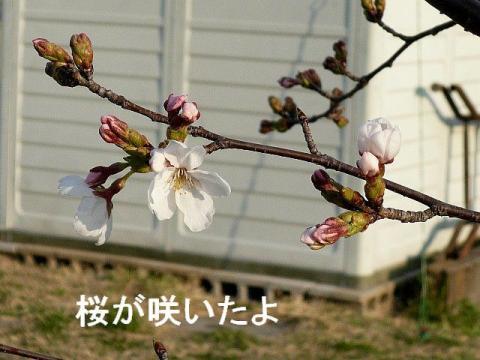 hana_20090329_2