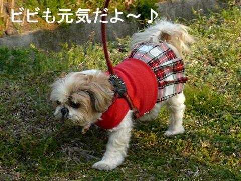 bibi_20090329_1