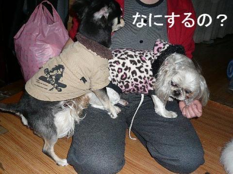 wan_20090410_4